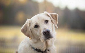 Главное, что должно существовать в ваших отношениях с собакой – взаимосвязь и контакт
