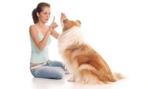 Как научить собаку контролировать свои эмоции