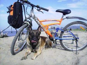 Физическая подготовка вашей собаки