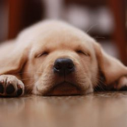 Что снится собакам?