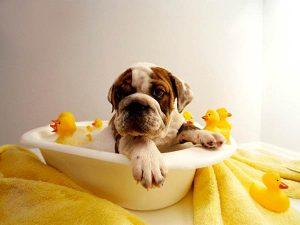 Как часто можно мыть собаку?