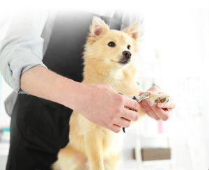Приучение к манипуляциям для ветеринарных осмотров и груминга