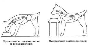 Подставка для кормления собаки: вред или польза?