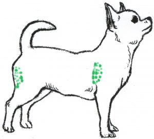 Как правильно сделать укол собаке.
