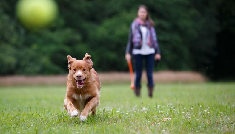 собака, прогулки без поводка