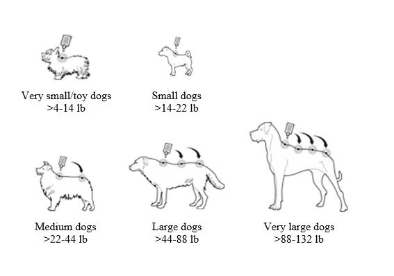Правила обработки собак от клещей.