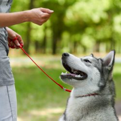 Шейпинг для собак как метод обучения
