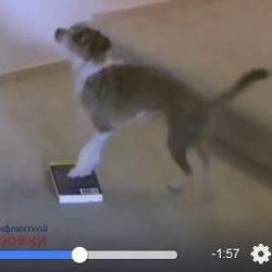Зачем и как обучать собаку движению задними лапами