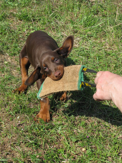 Значение игры в жизни собаки.