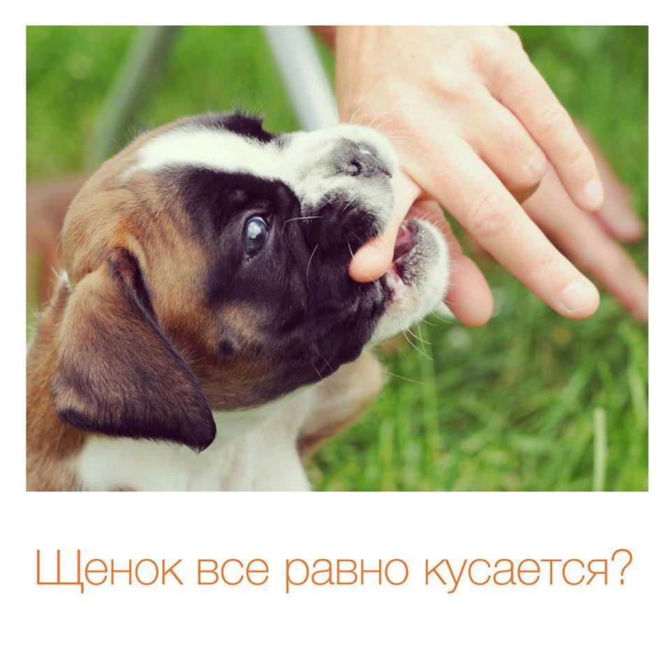 Как отучить щенка кусаться?
