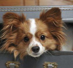 Как правильно оставлять собаку на передержку.